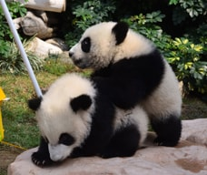 Macao Giant Panda Pavilion and Pavilion of Rare Animals
